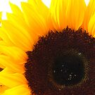 Sunflower by Kate Eling