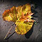 Giant leaf  by Pamela Burger