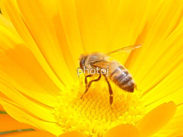 photoj  insect by photoj