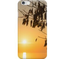 Brilliantly Sunlit Golden Autumn Jewels iPhone Case/Skin