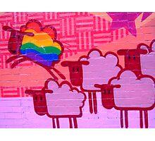 gay sheep Photographic Print