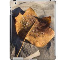 Tulip Tree Leaf – Frozen Raindrops in the Sunshine iPad Case/Skin