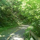dense forest by oilersfan11