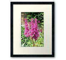 Pink Flowers in The Walled Garden, Heligan, Cornwall Framed Print