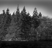 Trees at the Lake by elbee