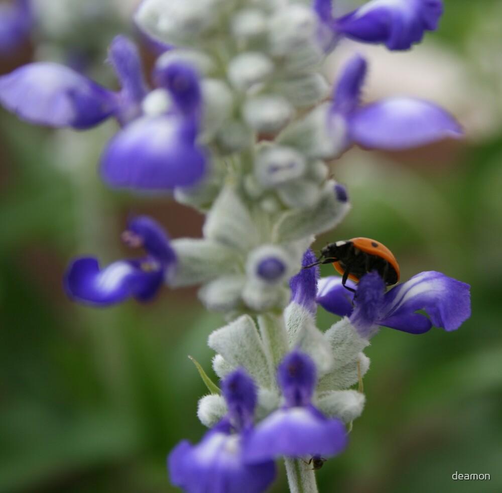 The Ladybird by deamon
