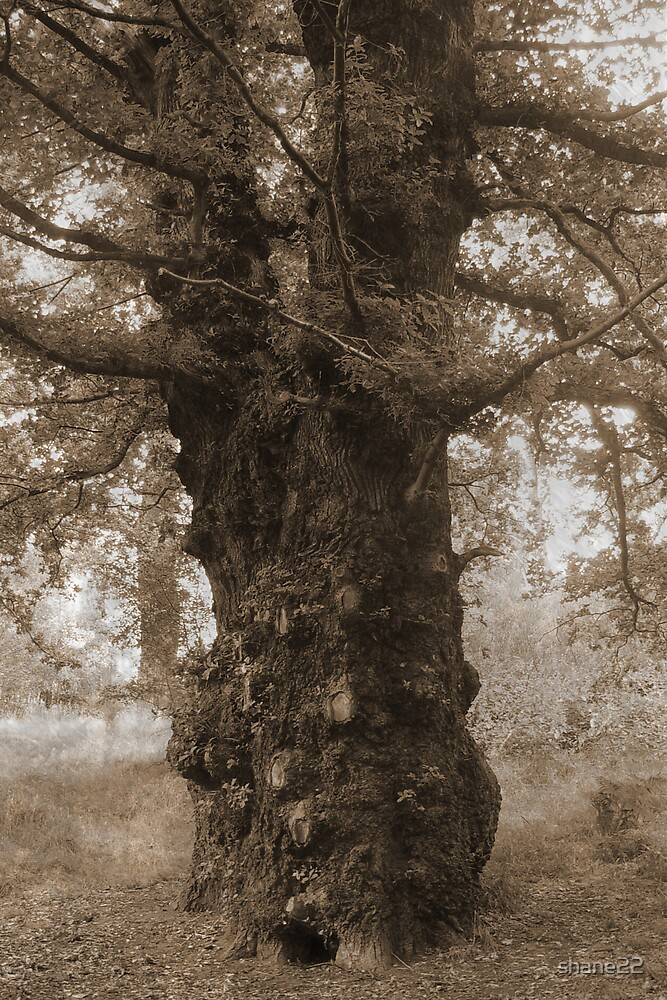 Ancient Tree by shane22