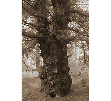 Ancient Tree Photographic Print