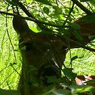 Deer at Bon Echo by Robert Lake