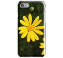 Little yellow daisy, floral, yellow, green, botanical iPhone Case/Skin