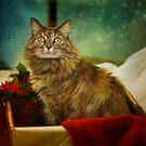 A Magical Christmas by Lynn Starner