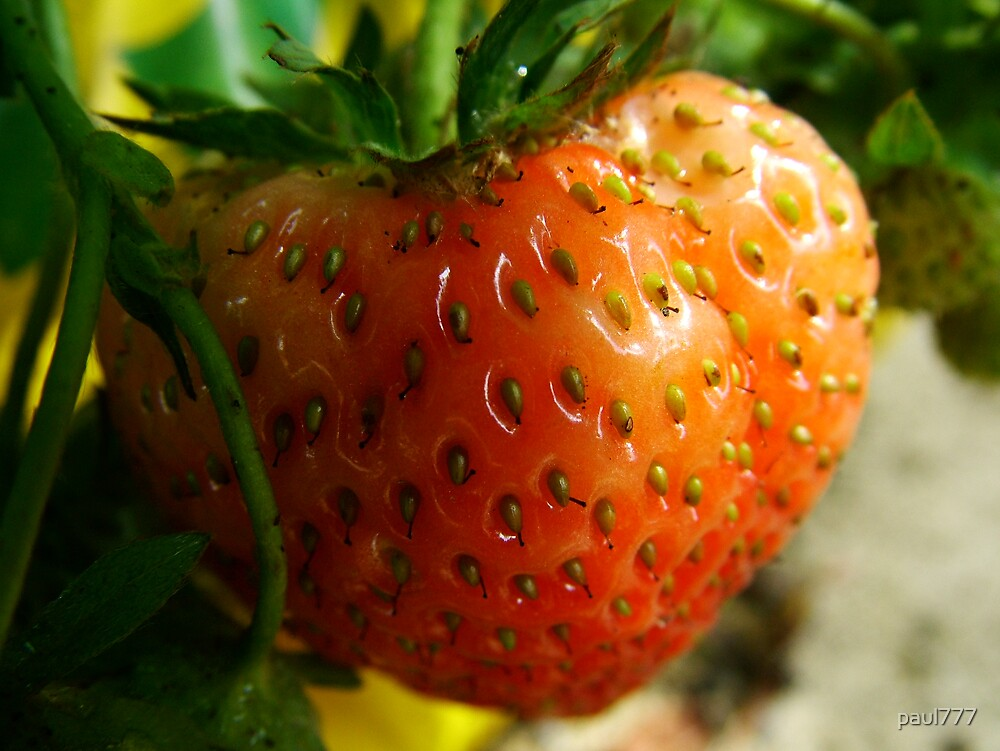 strawberry by paul777