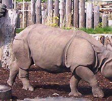 Rhino1 by Gilliankaye