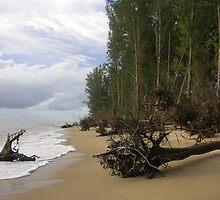 Fallen trees on thai beach by Amy Dawes
