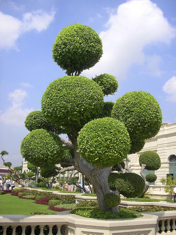 Funky thai tree by Amy Dawes