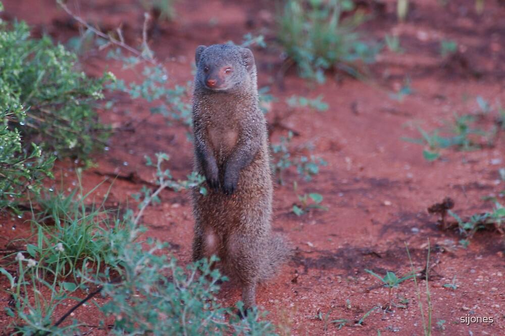 mongoose sentry by sijones
