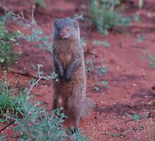 mongoose sentry by sijones