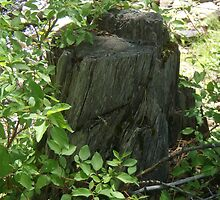 Wood Stump by jjstfinney