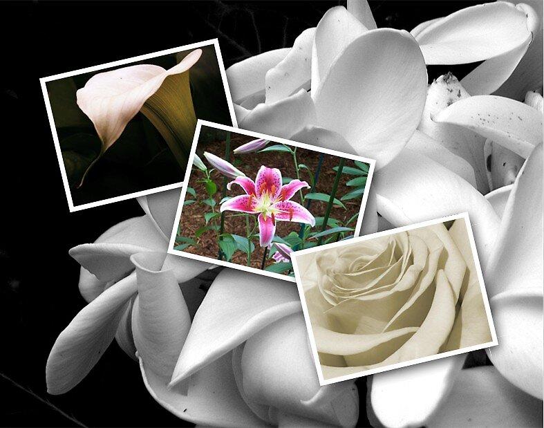 Flowers by RebeccaLickar