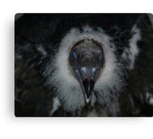 Blue Eyed Turkey Vulture Canvas Print