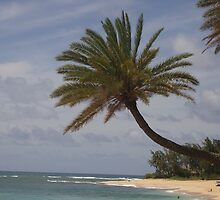 Grand Palm by abq26