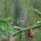 Neota Pines by Nate Welk