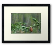 Neota Pines Framed Print