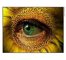 Sunflower with eye Photographic Print