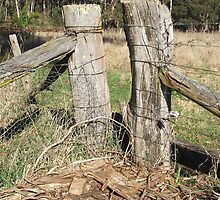Fence Posts by Karly Morris