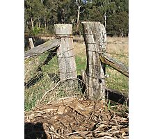 Fence Posts Photographic Print