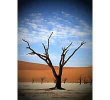 Cloud Tree Photographic Print