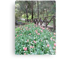 Tulips at Araluen Botanic Park   Metal Print
