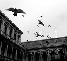 Bombing Piazza San Marco by Bilks