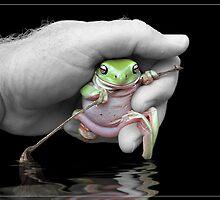 Tree frog by Jeff Davies