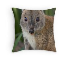 Red-necked Pademelon Throw Pillow