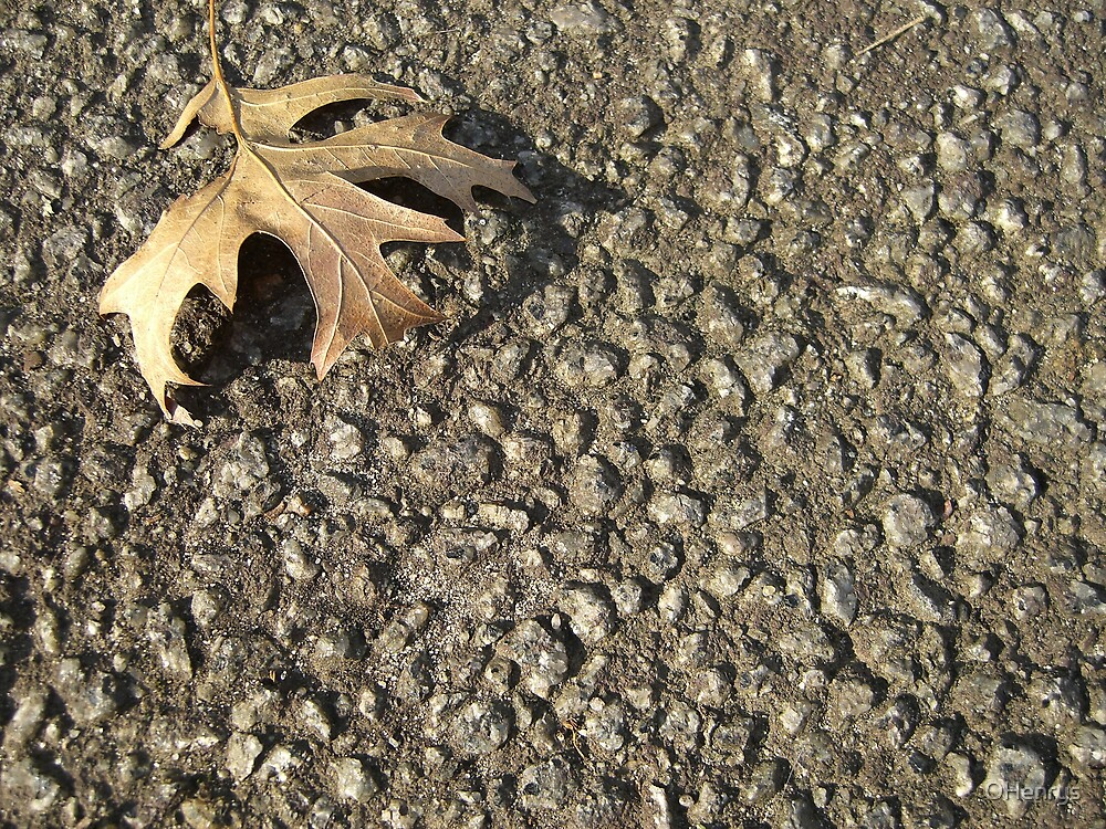 leaf in on Road TLC by OHenrys