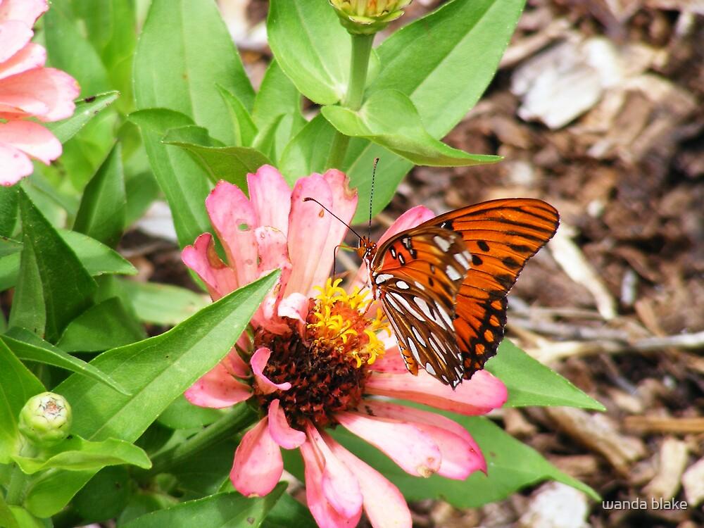 butterfly and zinnia by wanda blake