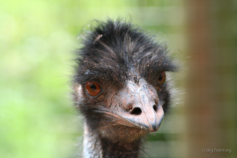 emu by craig hannay