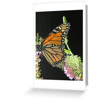 Beautiful Buttefly Greeting Card