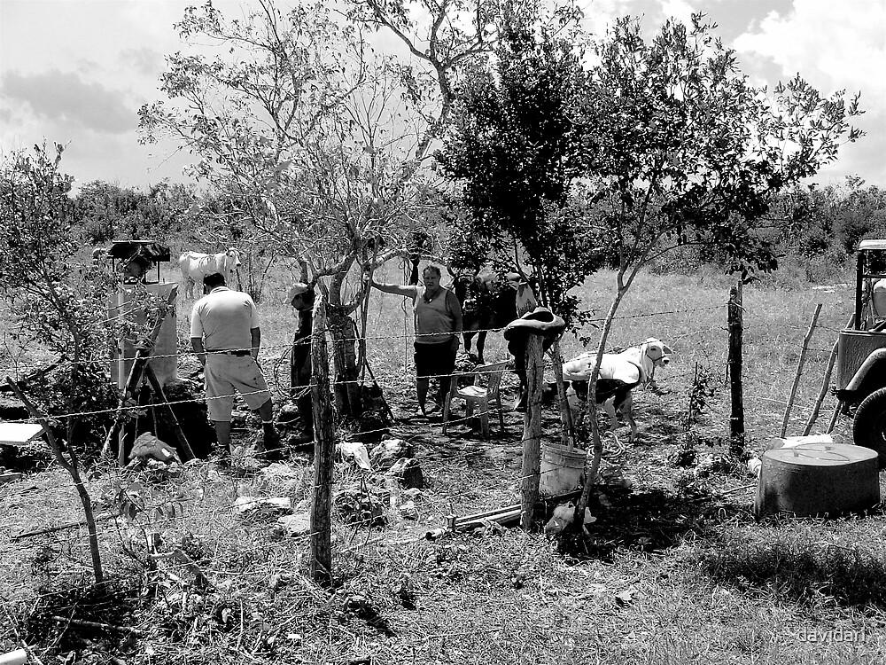 Laborers, Cozumel by davidari