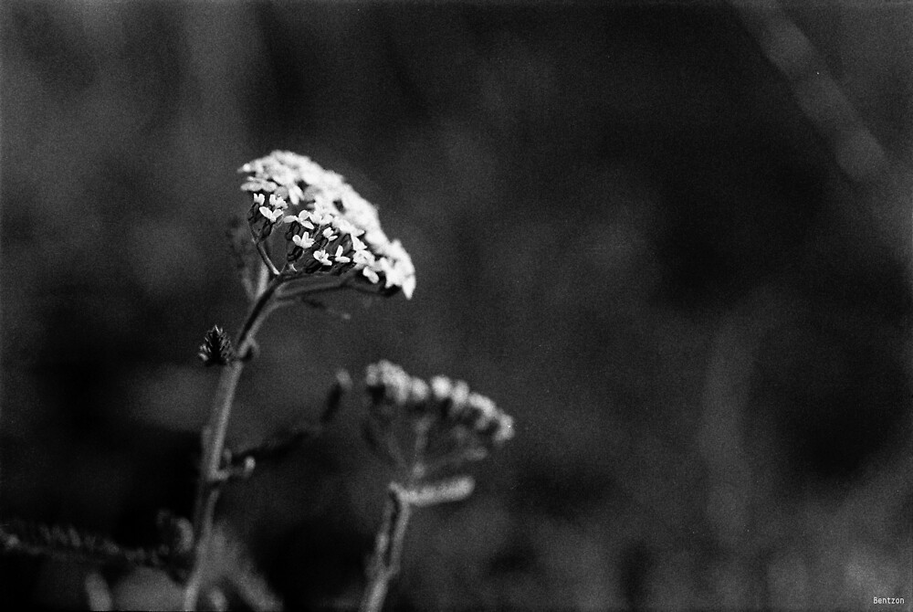 Hvidt på Sort - White on Black by Morten Bentzon