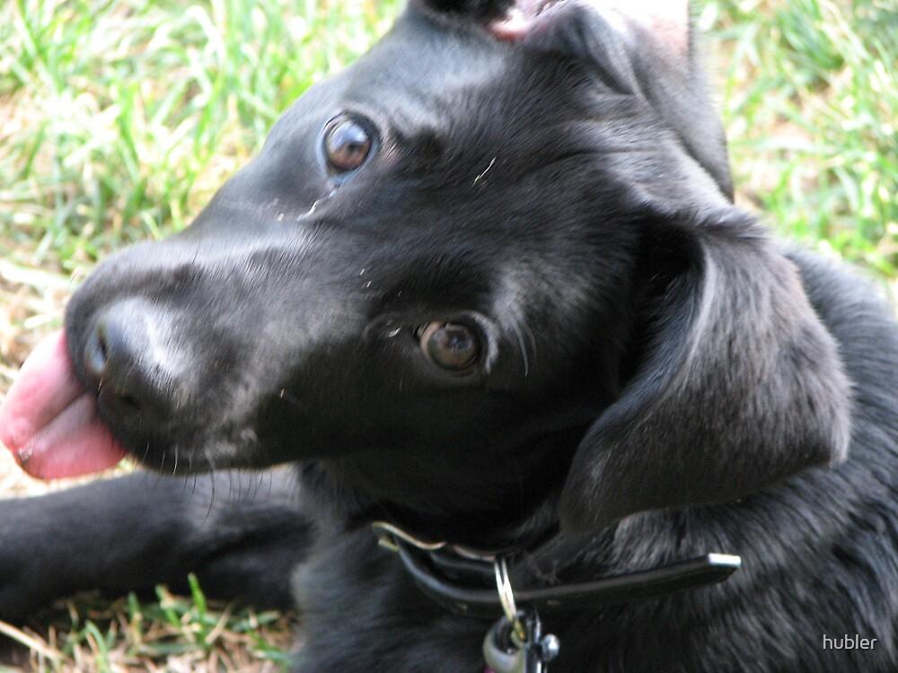 lab mix puppy-Maya-1 by hubler