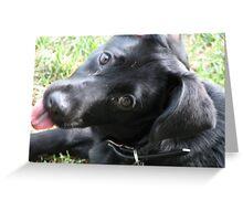 lab mix puppy-Maya-1 Greeting Card