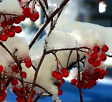Red ice by Rodica Nelson