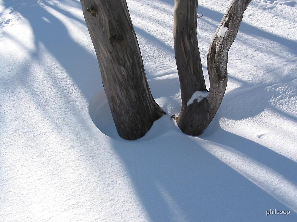 Snow Tree by philcoop