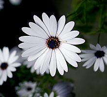 twlight flowers by lex stevens