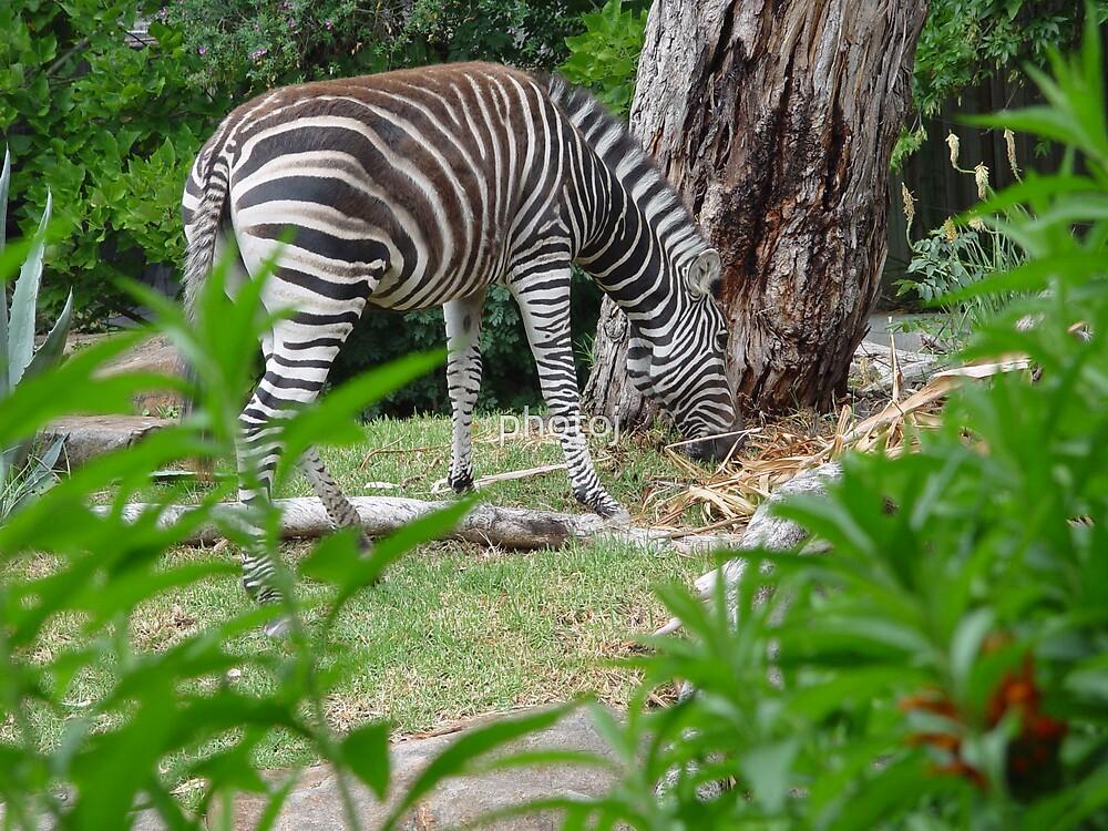 photoj animal by photoj
