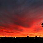 Gum tree sunset by BeninFreo