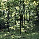 Woods at Rydal Lake District England 198405200008 by Fred Mitchell