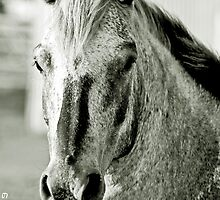 Horse by photo77